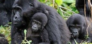 Mgahinga-Gorilla-National-Park-002