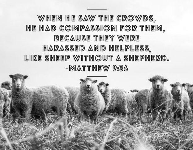 14th June 2020 Sheep Without A Shepherd Matthew 9 35ff Roger Farnworth